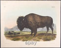 Audubon American Bison or Buffalo. 56, 1848 Quadruped FOLIO Colored Lithograph