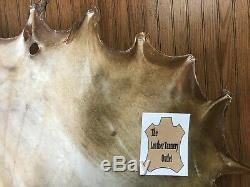 Bison Buffalo Rawhide North American Bison Drums, Crafts, Snowshoes