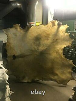 Bison Buffalo Whole Rawhide (HUGE) N. American Bison Drums, Crafts, Snowshoes