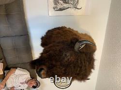 Bison buffalo head mount