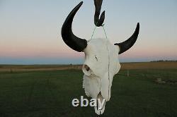 Buffalo Bison Head Skull Horns