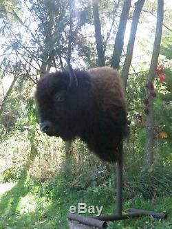 Buffalo Shoulder Mount/taxidermy/bison/hide/real