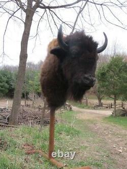 Buffalo Shoulder Mount/taxidermy/bison/hide/real 1