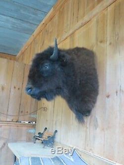 Buffalo Shoulder Mount/taxidermy/bison/hide/real 22