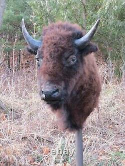 Buffalo Shoulder Mount/taxidermy/bison/hide/real 8