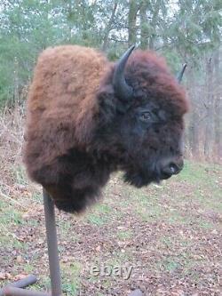 Buffalo Shoulder Mount/taxidermy/bison/hide/real A