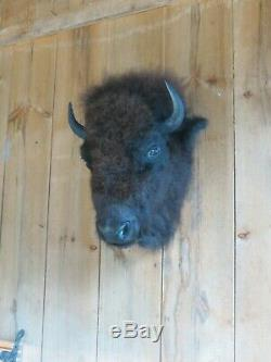 Buffalo head mount/taxidermy/bison/real 1