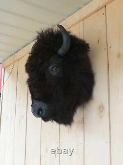 Buffalo head mount/taxidermy/bison/real 1