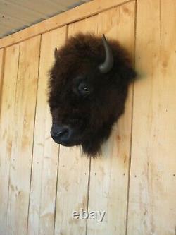 Buffalo head mount/taxidermy/bison/real 2
