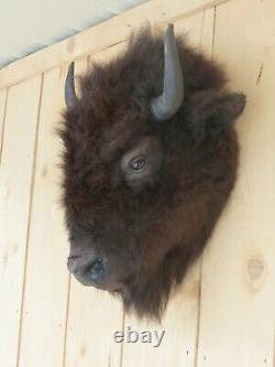 Buffalo head mount/taxidermy/bison/real 3