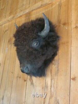 Buffalo head mount/taxidermy/bison/real 4