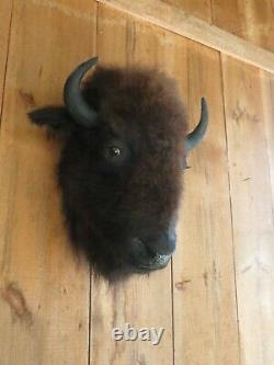 Buffalo head mount/taxidermy/bison/real 5