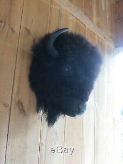 Buffalo head mount/taxidermy/bison/real 8