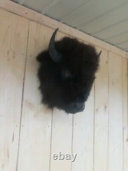 Buffalo head mount/taxidermy/bison/real 9