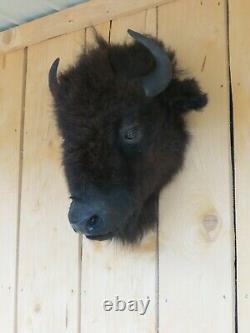 Buffalo head mount/taxidermy/bison/real B