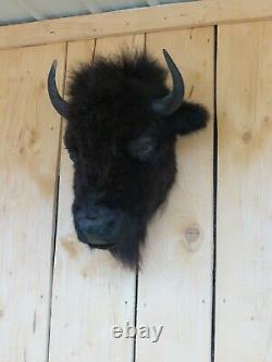 Buffalo head mount/taxidermy/bison/real B5