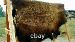 Freshly Tanned Wild Yellowstone Bison Buffalo Robe Blanket Hide Leather Antler