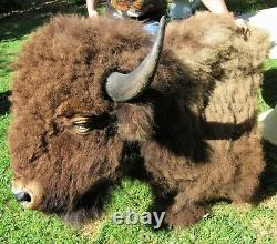 HUGE! REAL Buffalo Bison Shoulder Mount Taxidermy Ranch Cabin Man Cave Southwest