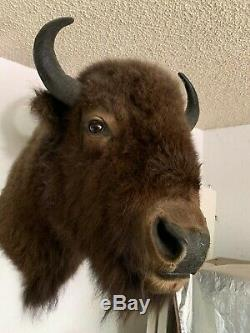 High Quality Alaskan Bison Head and Shoulder Mount 30x34x17
