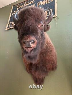 Large Vintage Taxidermy Bison Head Mount with Horns