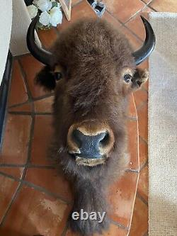 Monster North American Bison (Buffalo) Shoulder Wall Mount with FREE Shipping