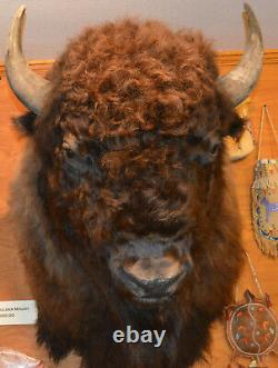 North American Bison (Buffalo) Shoulder Wall Mount with FREE Shipping