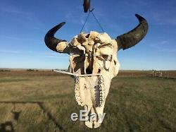 Old School Buffalo Skull Horns Bison Bone Teeth Huge Head 25 Bull