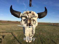 Old School Buffalo Skull Horns Bison Bone Teeth Huge Head 26 Bull