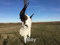Old School Buffalo Skull Horns Bison Bone Teeth Huge Head 27 Bull