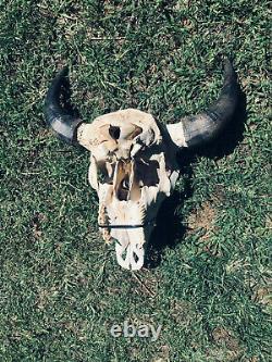 TAXIDERMY Big Old Buffalo/Bison/Skull/Herd Bull/logCabin/SouthWest/Hunting/Lodge