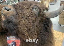 TROPHY BUFFALO SHOULDER MOUNT BISON HEAD ANTLER TAXIDERMY RARE Priceless #2