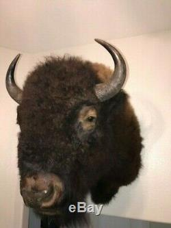 Trophy Buffalo Shoulder Mount, Bison Head, Antler Taxidermy Free Shipping